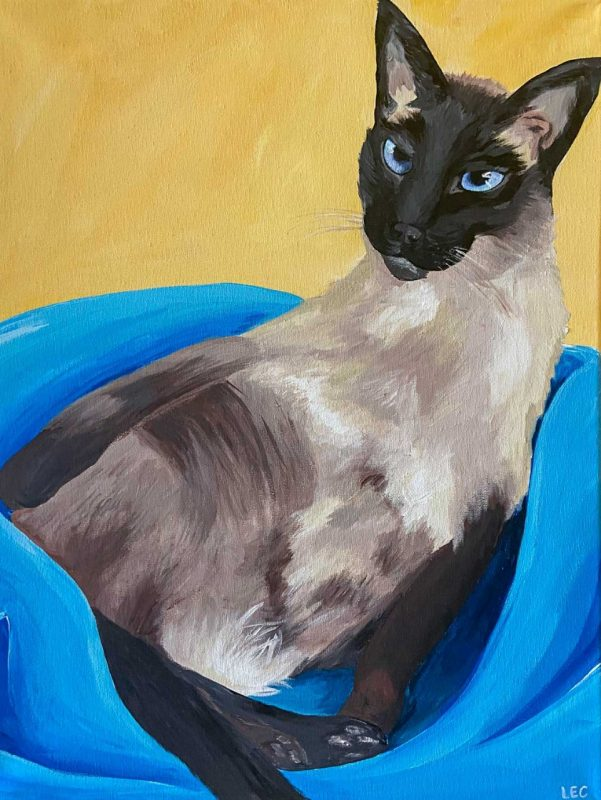 Siamese cat in a blue basket on a yellow background