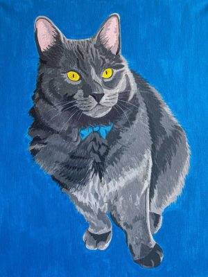 grey cat on a blue background